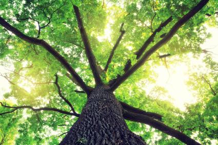 Dead Trees | VFM Blog